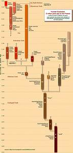 The Timeline Of Human Evolution  Image