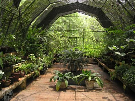 Green Home Design Ideas by How To Build A Greenhouse Outdoortheme