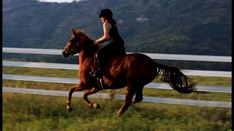 horse galloping fast