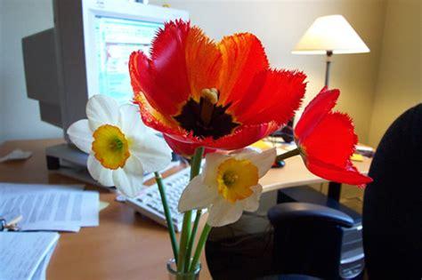 fleur de bureau fleurs de bureau banlieusardises