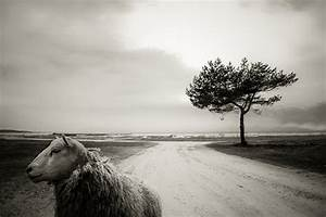Art of Composition in Photography- Tips and Examples ...