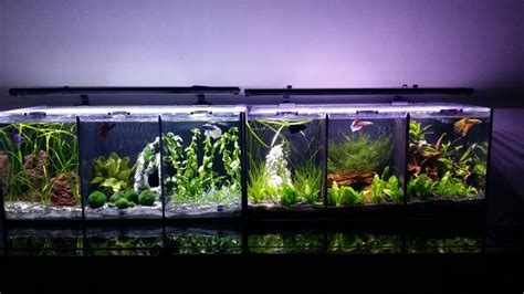 Aquascape Tank For Sale by Divided Betta Tank Freshwater Planted Nano