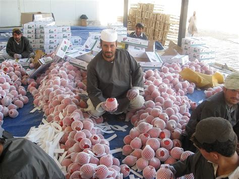 Pomegranate Production In Afghanistan Wikipedia