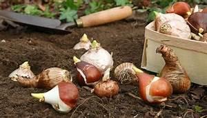 Comment Planter Du Muguet : jardin plantons maintenant tulipes et muguet de mai ~ Melissatoandfro.com Idées de Décoration