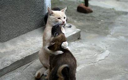 Cute Cats Dogs Animals Embrace Puppy Desktop