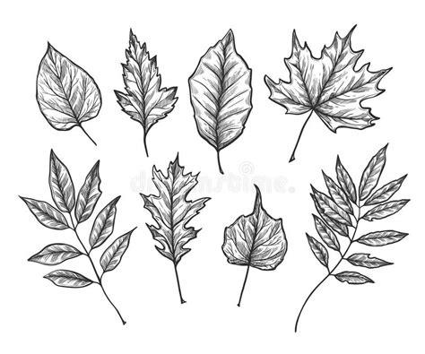 illustrazioni disegnate a mano di vettore insieme delle foglie di caduta immagine stock
