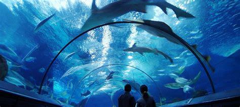 visite aquarium de shanghai shanghai aquarium guide shanghai shanghai voyage chine