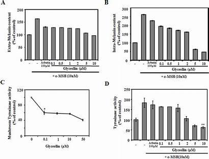 Melanin Tyrosinase Activity Effect Synthesis Extra Melanoma