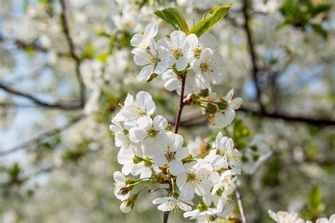 Free Images : tree branch fruit flower petal bloom