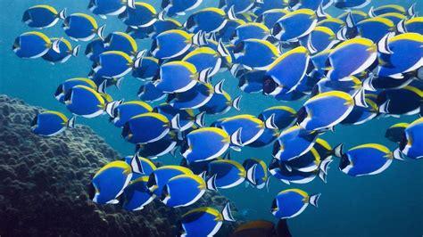 fish    sea referencecom