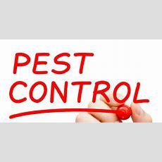 Preventative Pest Control Avoid Infestations  St Louis, Mo