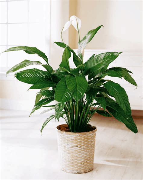 indoor plants blooms productivity in business homes
