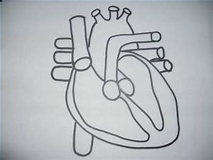 How To Draw The Internal Structure Of The Heart  14 Steps