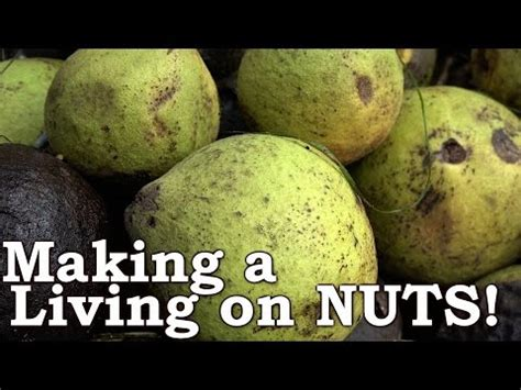 Busting Nuts Everything You Need Know Black