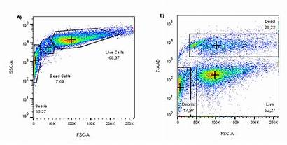 Cell Viability Flowcytometry Flow Cytometry Dead Ssc