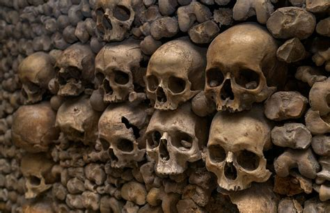 bones  background texture bones skull skeleton