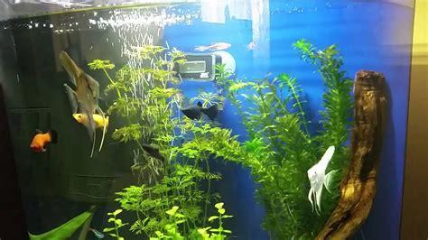 tetra aquaart explorer   aquarium youtube