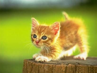 Kittens Adorable Lil Fanpop Kitten Cats Cutest