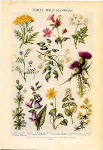 Contemporary Botanical Prints With Regard To The 25 Best ...