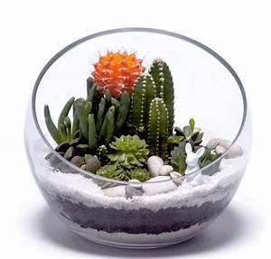 Minigarten Im Glas : diy der mini garten f r menschen ohne garten tr s click ~ Eleganceandgraceweddings.com Haus und Dekorationen