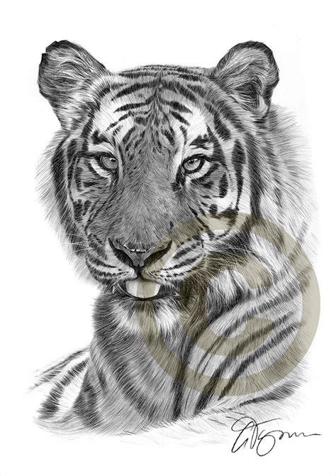bengal tiger art print artwork signed  artist gary