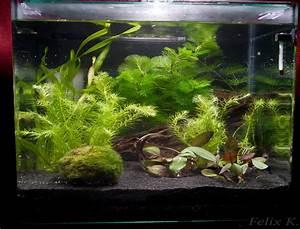 Aquarium Einrichten Beispiele : zierfische im aquarium aquarium knowhow ~ Frokenaadalensverden.com Haus und Dekorationen