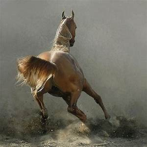 74 best running horse images on Pinterest | Beautiful ...