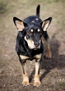 Wall, NJ Mixed Breed Dog Has Epileptic Seizures