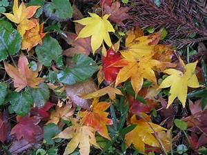 Autumn, Leaf, Color