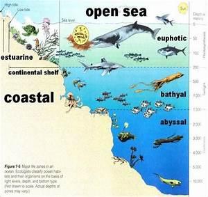 Open Ocean Diagram And Zones