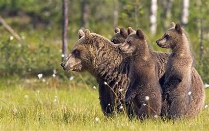 Wild Animals Wallpapers