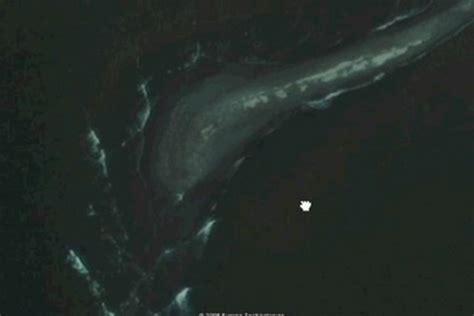 google earth sea monster  vimeo