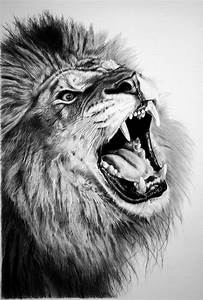 17  Lion Drawings  Pencil Drawings  Sketches