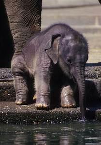 baby elephant water luvbat