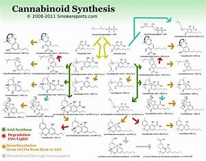 thc and cbd chemical structure