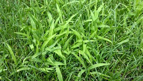 The 5 Best Crabgrass Killers + Reviews & Ratings! (sep. 2018