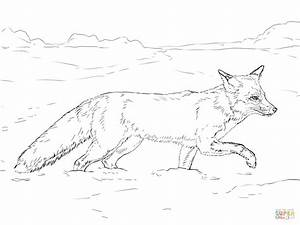 Drawn elk taiga animal - Pencil and in color drawn elk ...