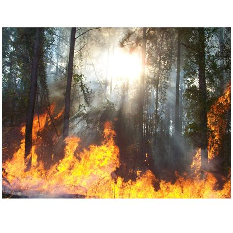 making  impact firecenter university  montana