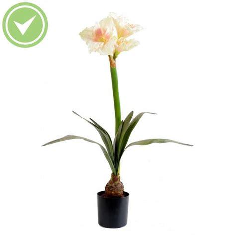 entretien amaryllis en pot amaryllis bulbe en pot 3fl 1bt plante artificielle fleurie maison et fleurs