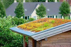 Extensive Dachbegrünung Pflanzen : dachbegr nung auf ihrem gartenhaus so geht 39 s ~ Frokenaadalensverden.com Haus und Dekorationen