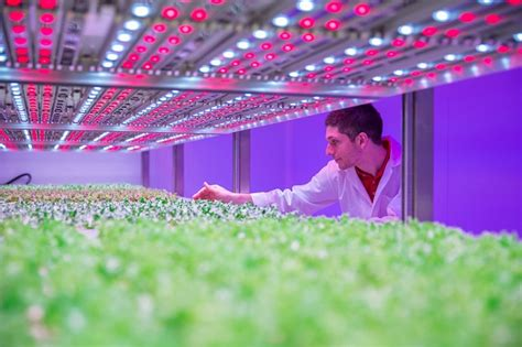 indoor farming led lights philips growwise reveals research results on indoor