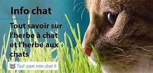 Herbe à Chat : herbe chat et herbe aux chats ~ Melissatoandfro.com Idées de Décoration