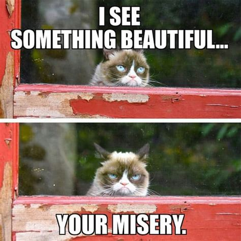 Meme Grumpy Cat - grumpy cat meme grumpy cat pictures and angry cat meme