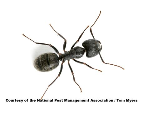 Fun Facts About Ants & Ant Information For Kids