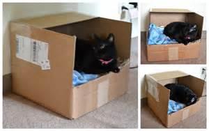 cat bed diy diy cat beds trusper