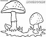 Mushroom Coloring Pages Toadstool Magic Mushrooms Template Printable Print Getcolorings Pa Getdrawings Awesome sketch template