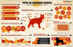 metairie small animal hospital how is heat stress in pets msah metairie
