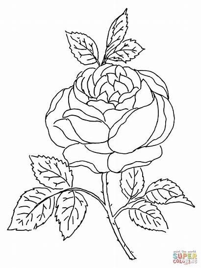 Rosa Rose Colorir Coloring Rosas Desenhos Flores