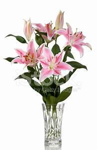 Tiger Lilies IN Vase Stock Photos - FreeImages com