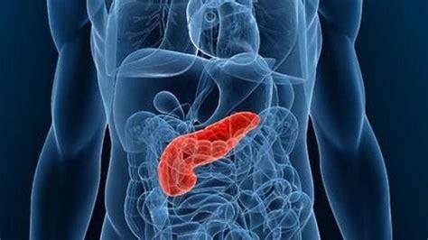 funcion del pancreas cual es tipos importancia